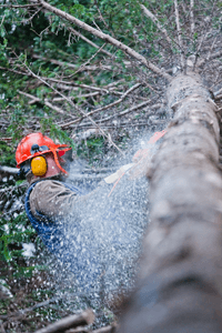 professional-lumberjack-cutting-a-big-tree-in-the
